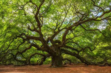 Tranh rừng cây 17