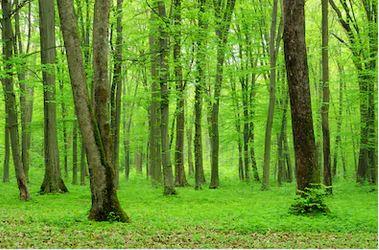 Tranh rừng cây 02