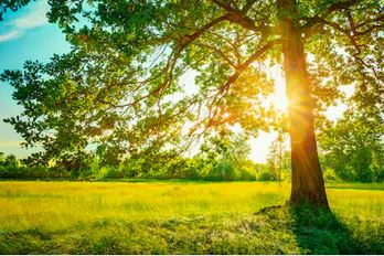 Tranh rừng cây 20