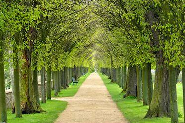 Tranh rừng cây 21