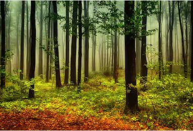Tranh rừng cây 27
