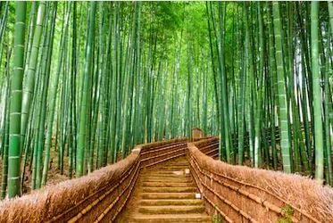 Tranh rừng cây 28