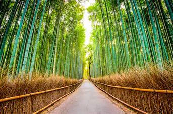 Tranh rừng cây 29