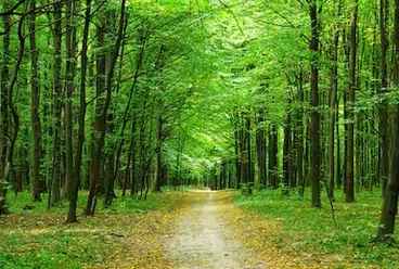 Tranh rừng cây 03