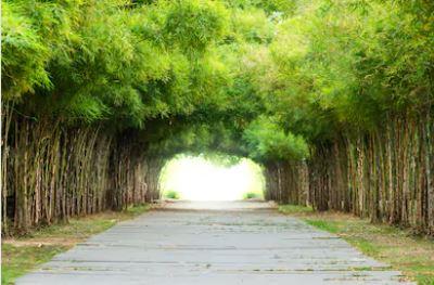 Tranh rừng cây 30