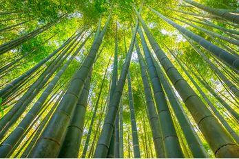 Tranh rừng cây 31