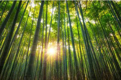 Tranh rừng cây 34