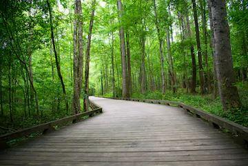 Tranh rừng cây 35