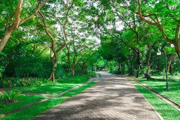 Tranh rừng cây 36
