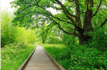 Tranh rừng cây 37