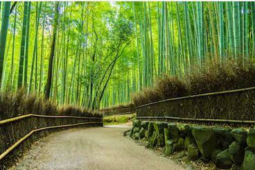 Tranh rừng cây 38