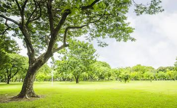 Tranh rừng cây 04