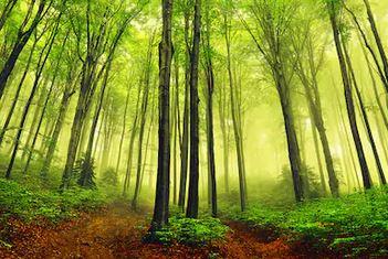 Tranh rừng cây 41