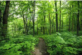 Tranh rừng cây 42