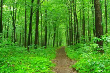 Tranh rừng cây 43