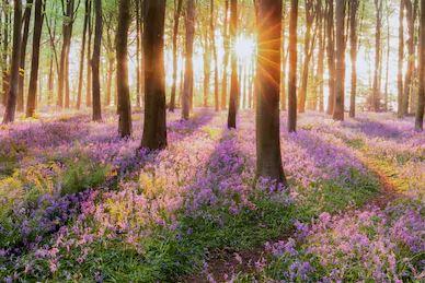 Tranh rừng cây 44