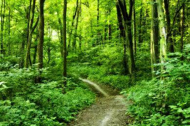 Tranh rừng cây 45