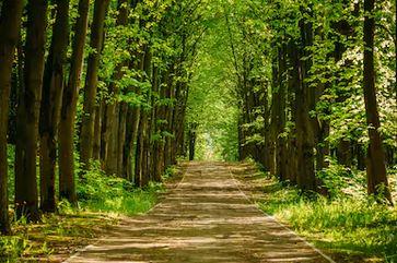 Tranh rừng cây 46