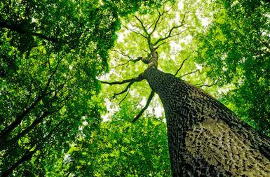 Tranh rừng cây 47