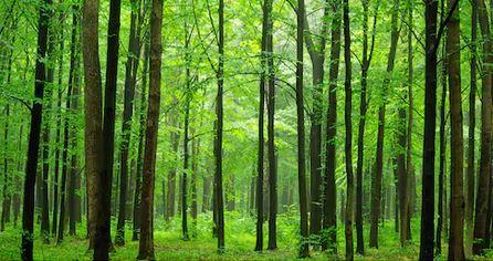 Tranh rừng cây 48