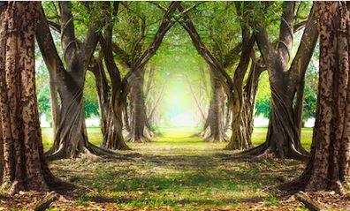 Tranh rừng cây 49
