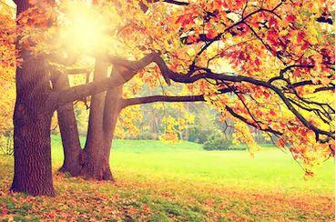 Tranh rừng cây 05