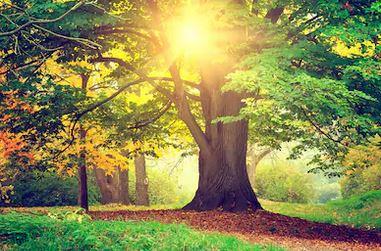 Tranh rừng cây 55