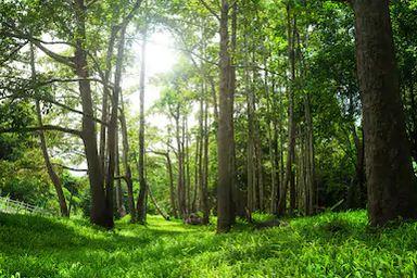 Tranh rừng cây 56