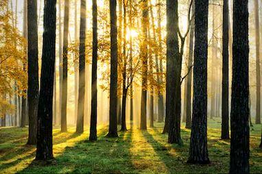 Tranh rừng cây 57