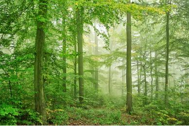 Tranh rừng cây 58