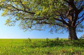 Tranh rừng cây 06