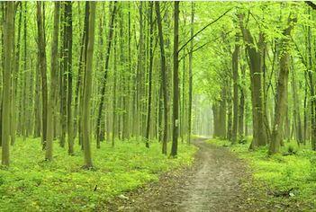 Tranh rừng cây 60