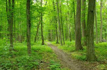 Tranh rừng cây 61