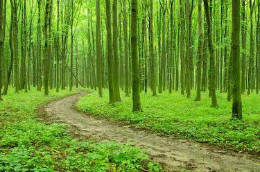 Tranh rừng cây 62