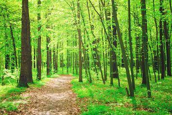 Tranh rừng cây 63