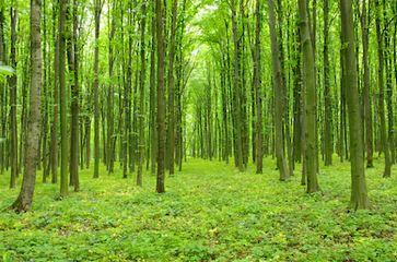 Tranh rừng cây 64