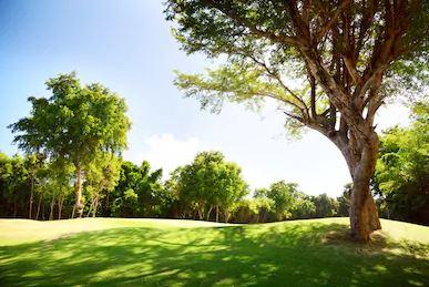 Tranh rừng cây 68