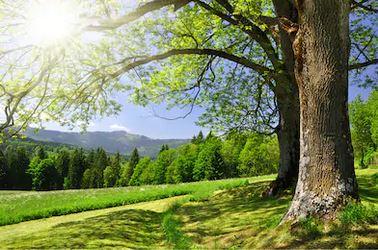 Tranh rừng cây 07