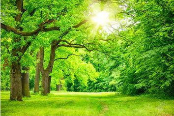 Tranh rừng cây 70