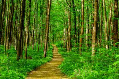Tranh rừng cây 71