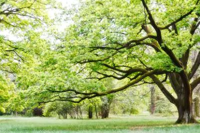 Tranh rừng cây 08