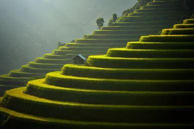 Tranh ruộng bậc thang 14