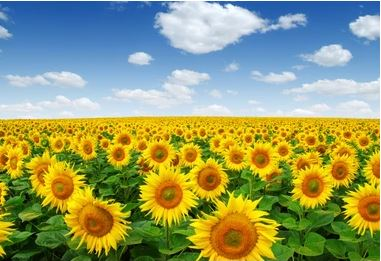 Tranh vườn hoa - TVH50