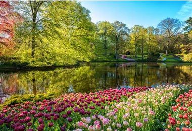 Tranh vườn hoa - TVH53