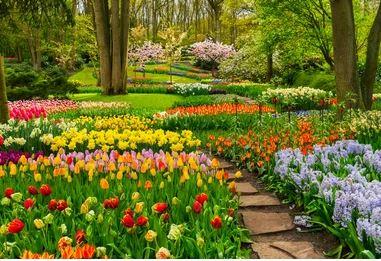 Tranh vườn hoa - TVH56