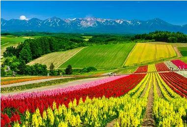 Tranh vườn hoa - TVH58