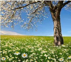 Tranh vườn hoa - TVH59