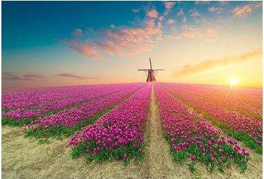 Tranh vườn hoa - TVH60