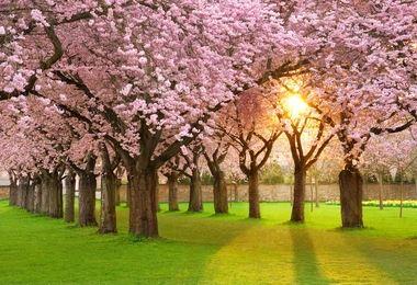 Tranh vườn hoa - TVH61