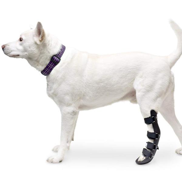 Nẹp Chân Cún Mèo [Chân Sau] Walkin' Pet Splint - Canine Rear Leg